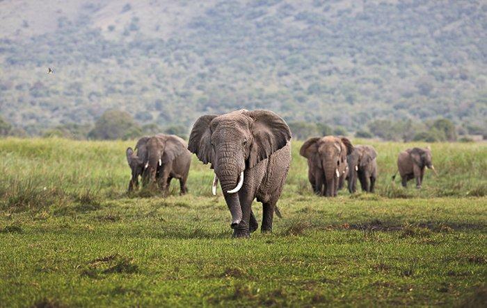 © Horst Klemm/ African Parks