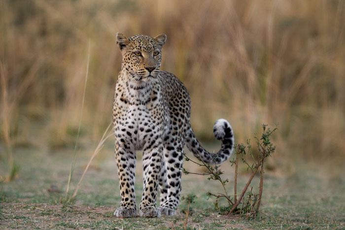 luangwa-valley-zambia