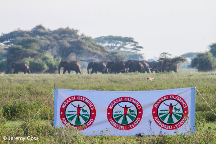 As the athletes warm up, a herd of elephants moves quietly past.