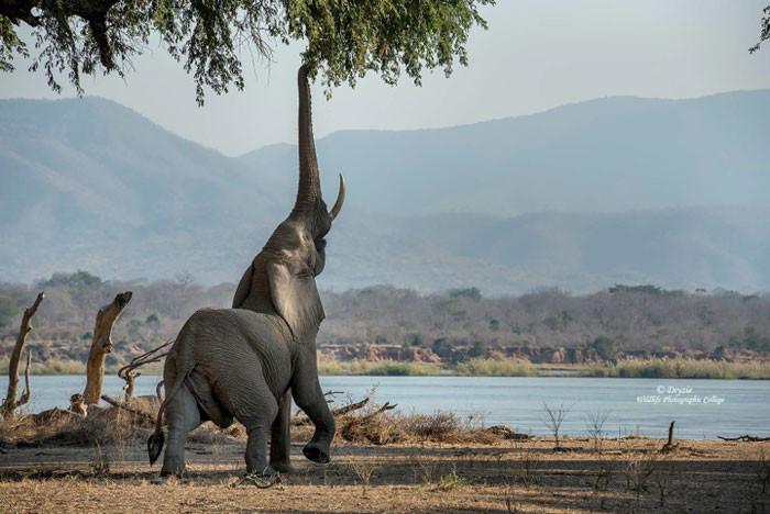 mana-pools-photo-of-elephant-700x468