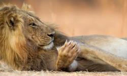 south-luangwa-photo-safari-with-ed-selfe