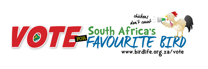 Birdlife-South_Africa-favourite-bird