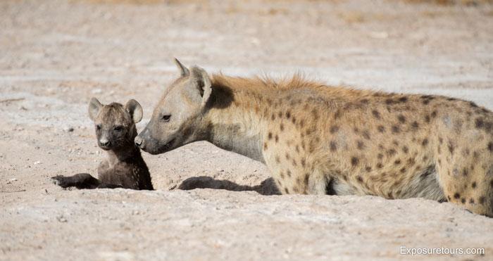 Exposure-Tours-hyena-den-Puppy