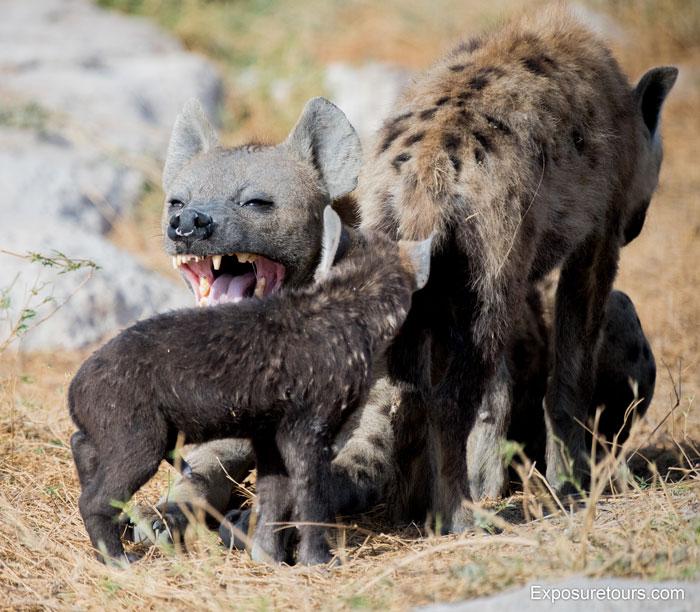 Exposure-Tours-hyena-den