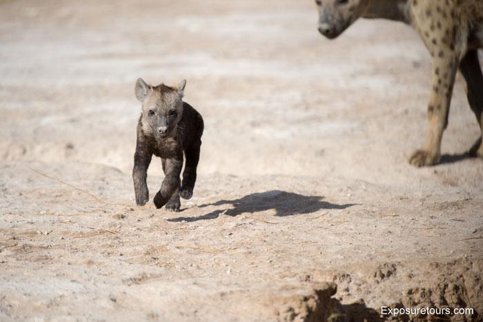 Exposure-Tours-hyena-puppy-den