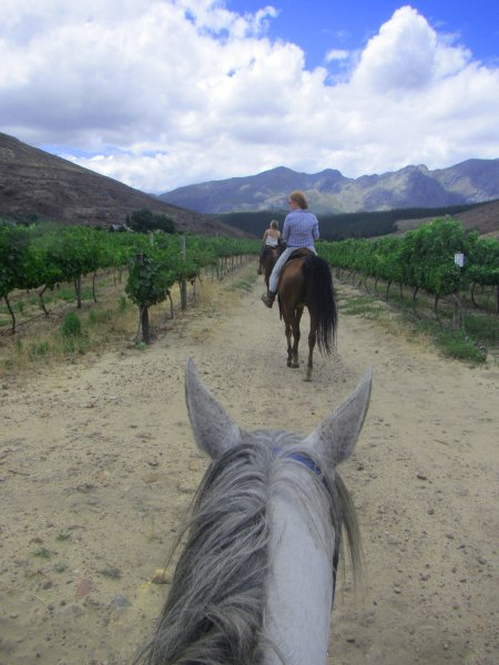 Horse-riding-wine-tasting-Franshoek