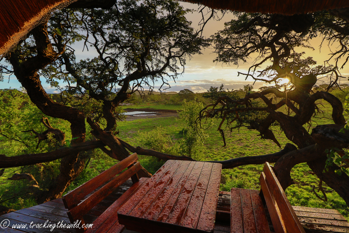 Mokala s treehouse with a view africa geographic - House with a view ...
