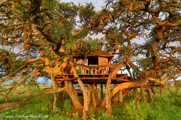 Mokala\'s treehouse with a view - Africa Geographic