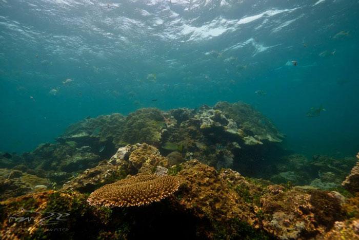 Reefscape Lamu