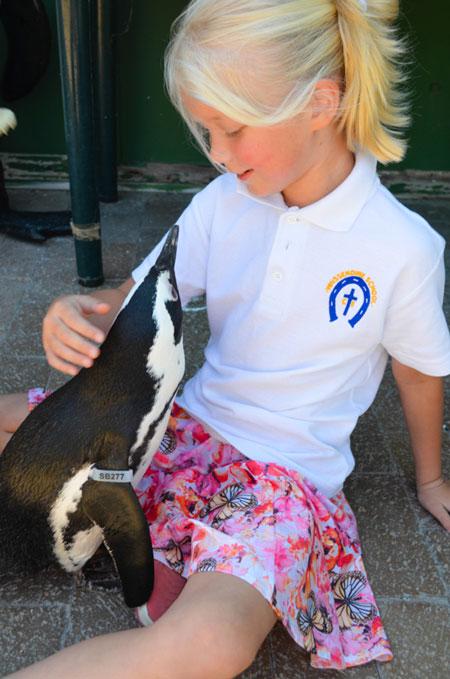 SANCCOB-St-Francis-Penguin