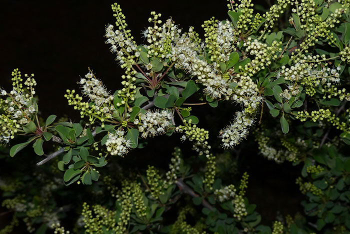 Tuli-lodge-flowers
