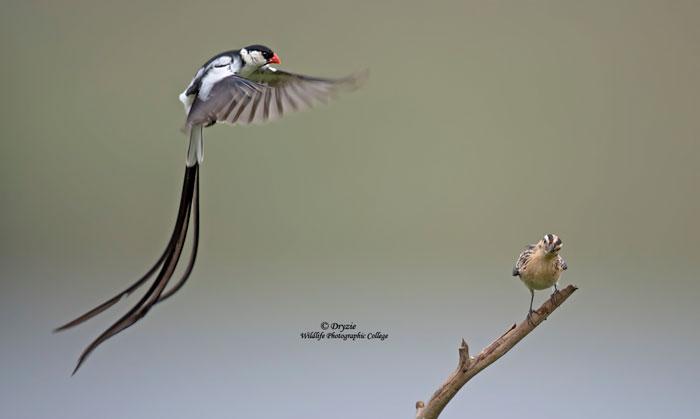 Wildlife-photographic-college