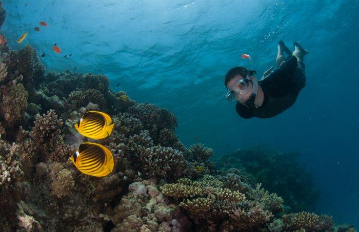 freediver-reef-raccoon-butterflyfish-egypt