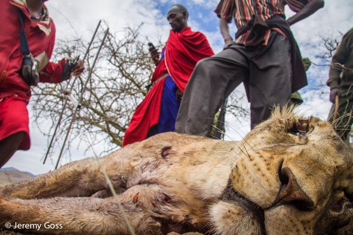 lions led by donkeys essay