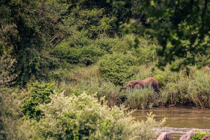 elephant-majete