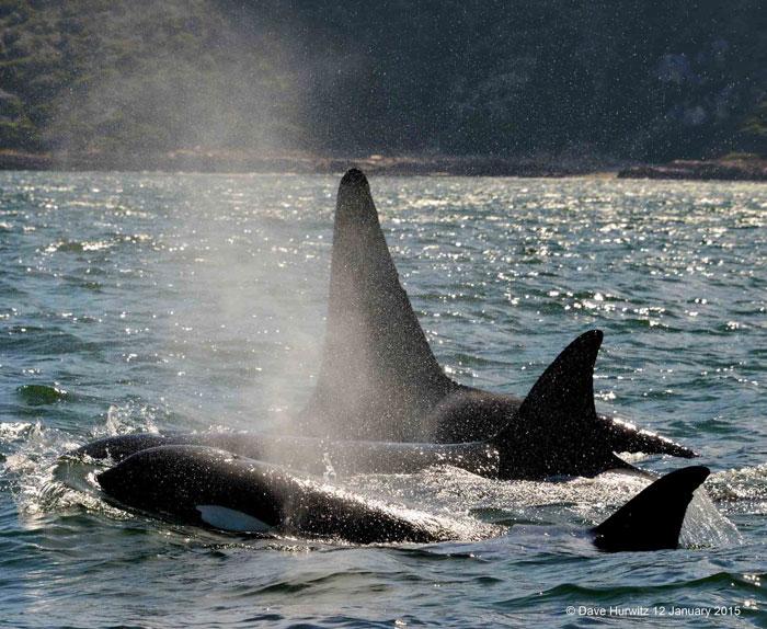 orca-cape-town