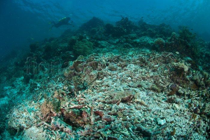 General Reef Scene, Raja Ampat, Indonesia
