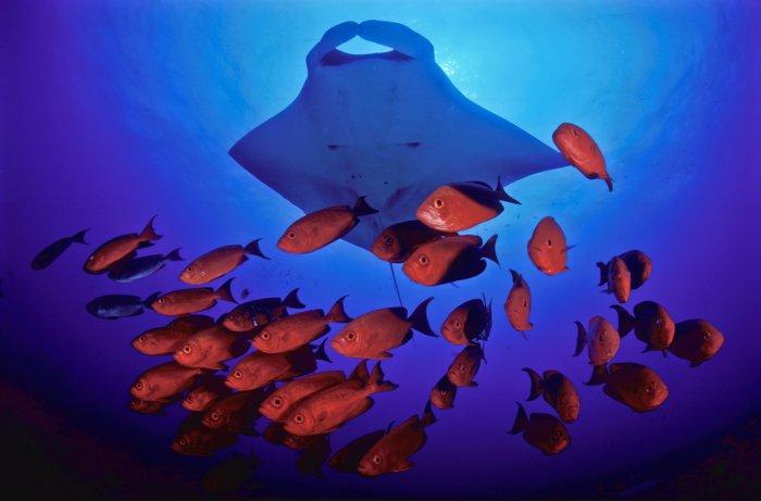 sting-ray-fish-Fiona-Ayerst