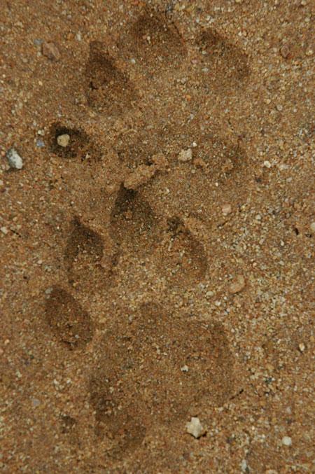 tanda-tula-tracks