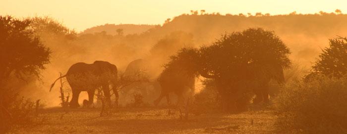 tuli-botswana-elephants