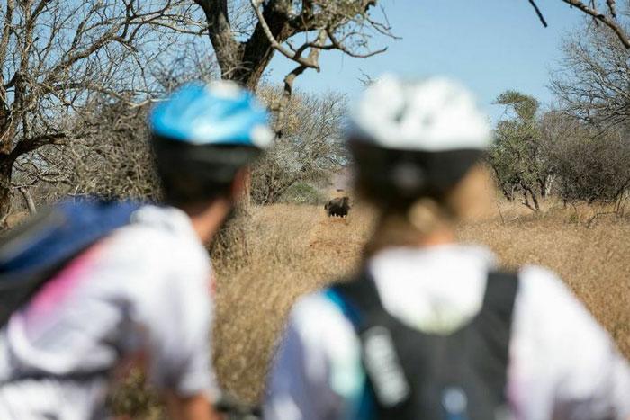 bush-cycle-rhino