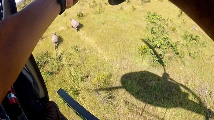 chopper-patrol-rhinos