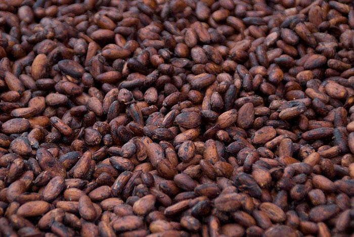 cacao cocoa