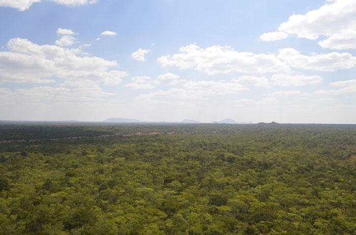 forest Malawi