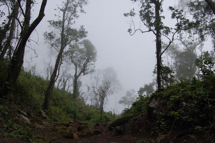 mount-mulanje-forest