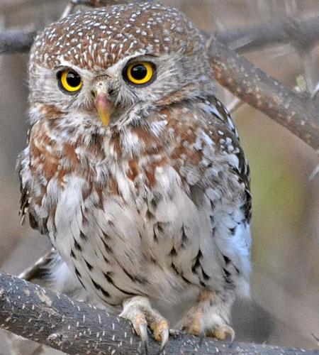 Botswana birdlife
