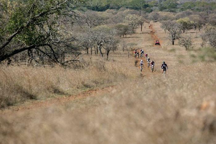 rhino-cycle-bush