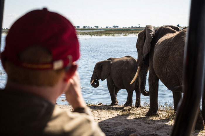 chobe game drive elephants