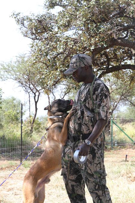 Dog trainer and malinois