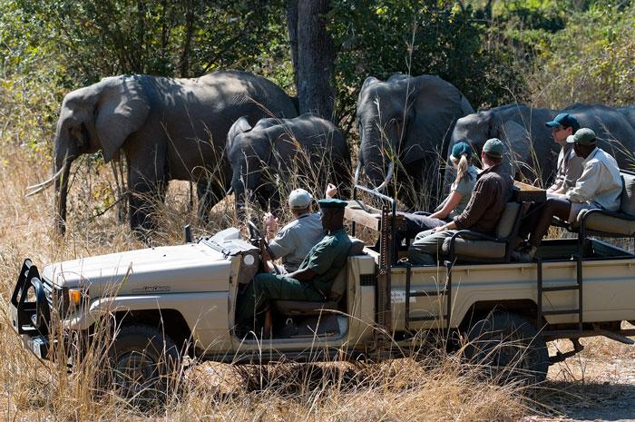 nkwali robin pope safaris