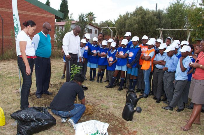 planting trees at school