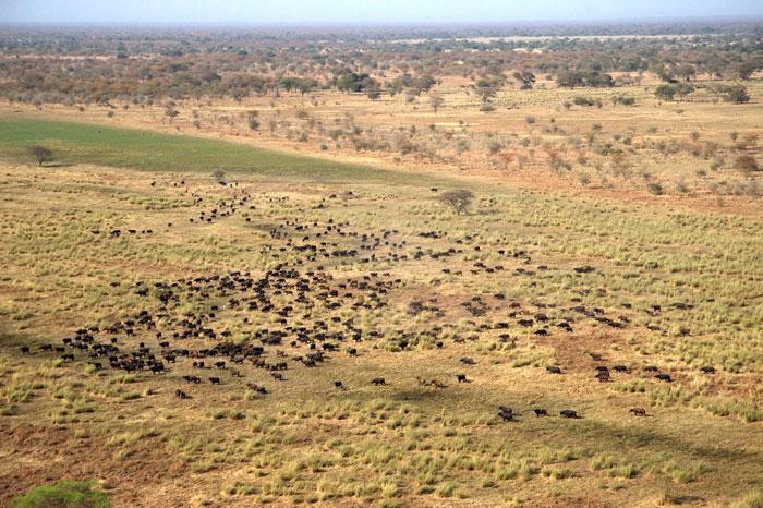 zakouma-animal-herds