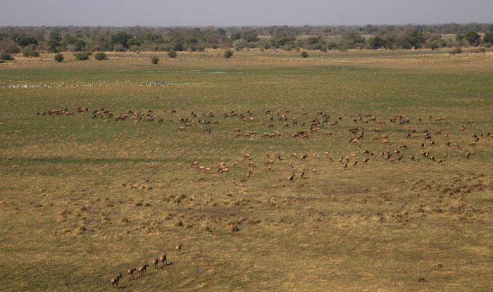 zakouma-antelope-herds