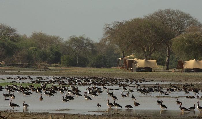 zakouma-camp-birdlife