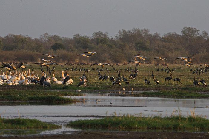 zakouma-chad-birdlife