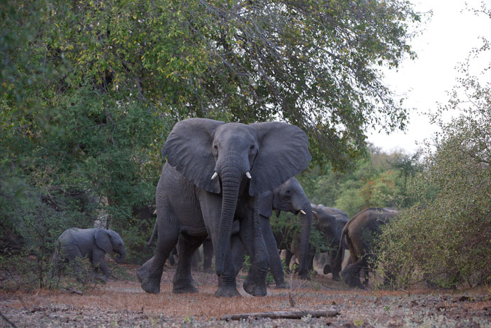zakouma-elephants