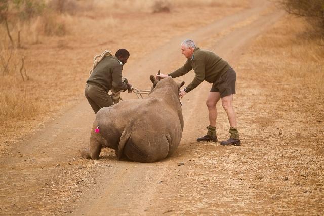 Unite Against Poaching 1 Year Of Helping Rhinos Africa