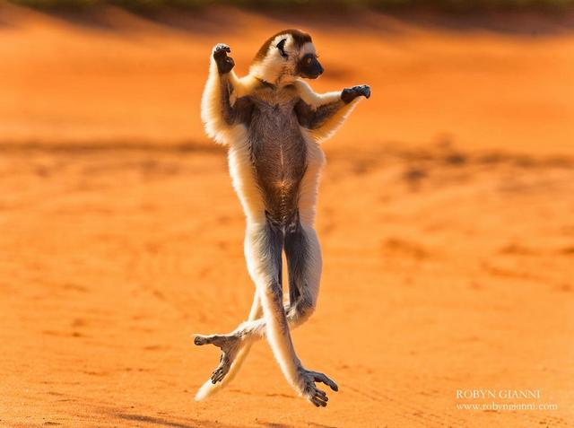 487211 445771925492433 1975133108 n - Collection of funny african wildlife photos