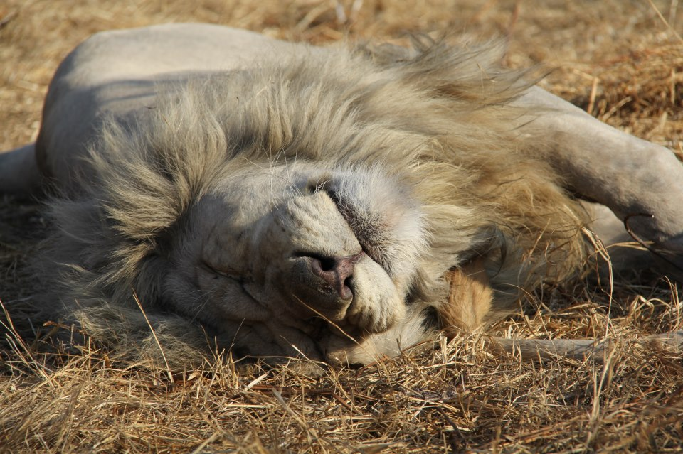 11 Pics Of Wild Animals Juuuust Relaxing Africa Geographic