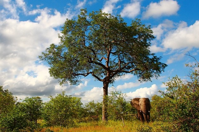5 Amazing African Trees - Africa Geographic