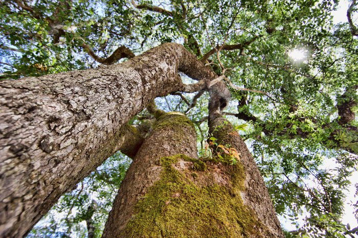 Rooting For Trees Africa Geographic