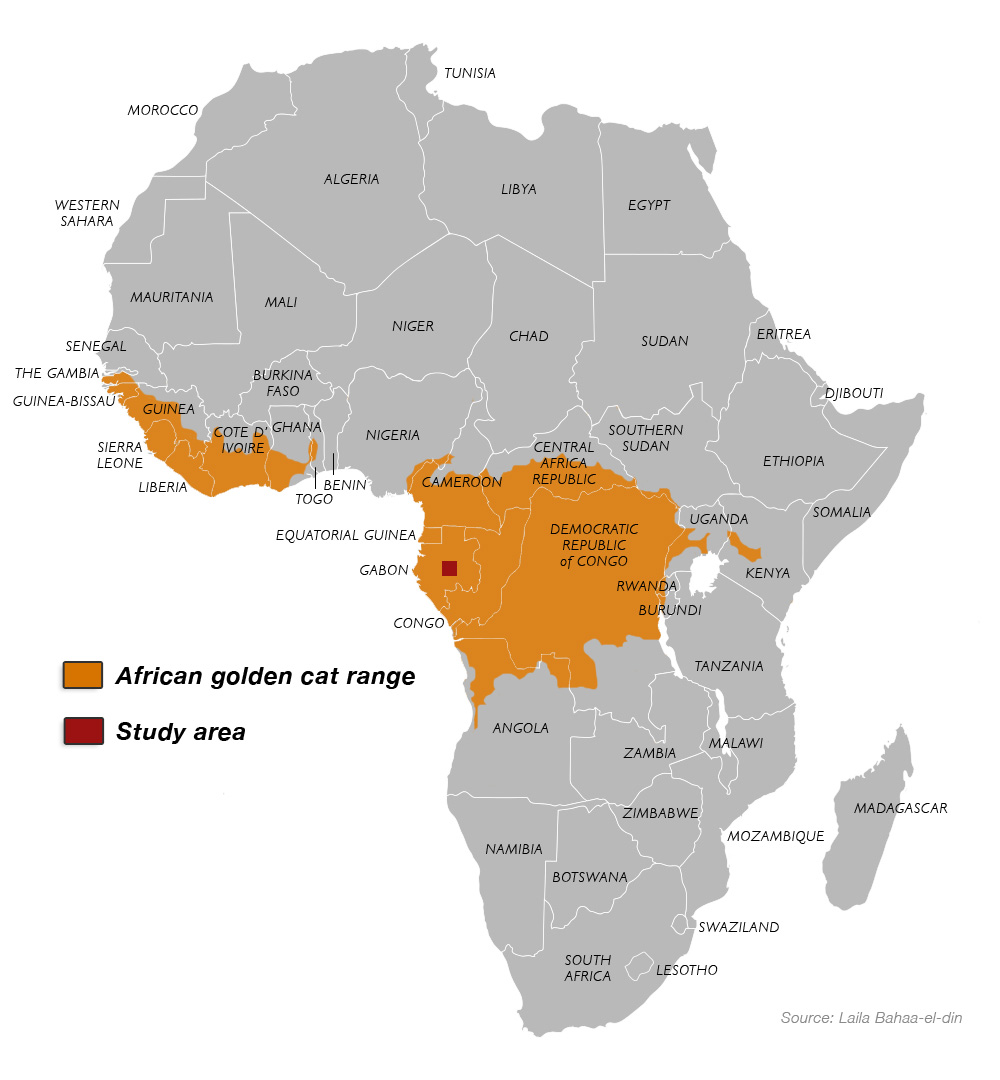 African-golden-cat-range-map-2
