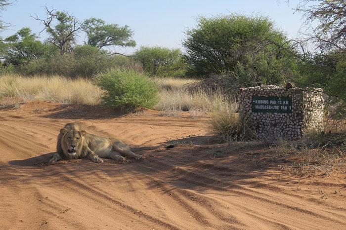 a kgalagadi safari in pictures africa geographic
