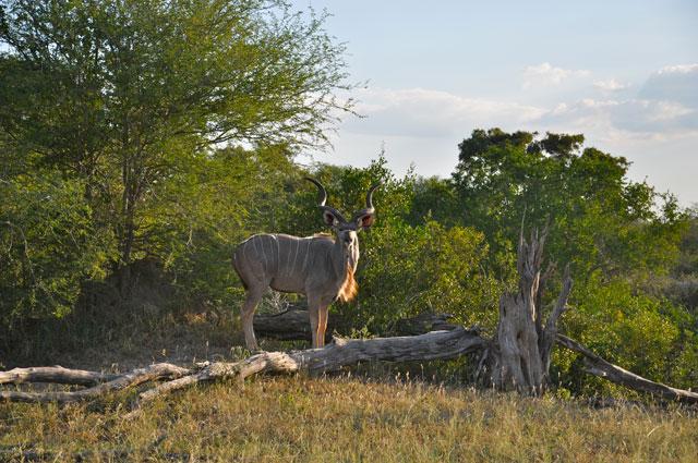 12 Safari Highlights From The Kruger National Park