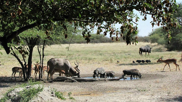 Tales From The Haina Watering Hole Africa Geographic