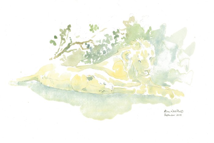 """Here is the finished field sketch, Powernap, 11x14"""" field sketch by Alison Nicholls."""